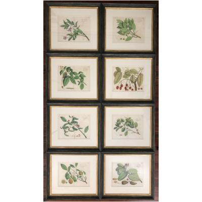 Antique Set/8 of Botanicals
