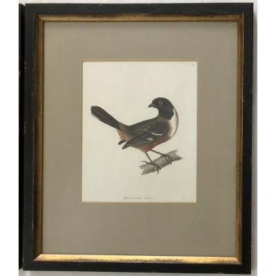 Antique Hand Colored Bird Lithograph