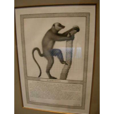 Antique Lemur Print (Series of 6)