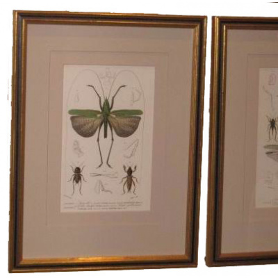 D'Orbigny Winged Insects Print