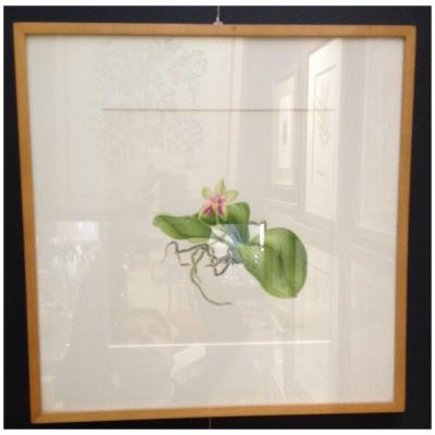 Original Tcherepnine Orchid Watercolor C